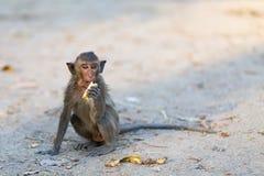 Mono ciego del bebé Fotos de archivo