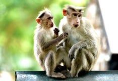 Mono común en thekkady amigos de una naturaleza fotografía de archivo