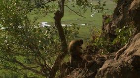 Mono con cala en fondo almacen de metraje de vídeo