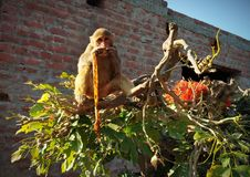 Mono con el árbol imagen de archivo