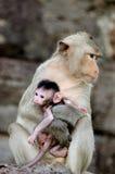 Mono con el bebé Fotografía de archivo libre de regalías