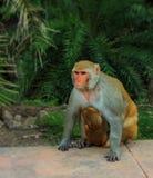 Mono con el bebé imagenes de archivo