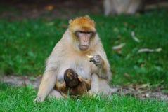 Mono con el cachorro Fotografía de archivo