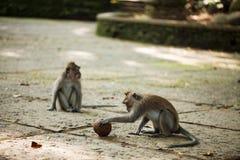 Mono con la bola Fotos de archivo libres de regalías