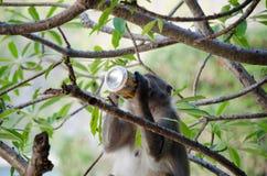 Mono con la cerveza Imagenes de archivo