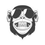 Mono con las gafas de sol Fotografía de archivo