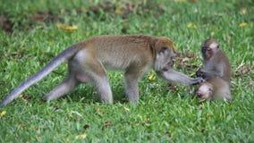 Mono con los jóvenes Imagenes de archivo