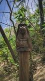 Mono con los oídos cubiertos foto de archivo