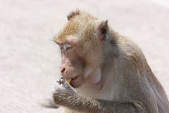 Mono con sus propias actividades Imagen de archivo