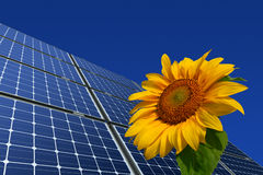 Mono-crystalline Solar Panels And Sunflower Stock Images