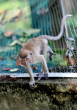 Mono curioso Imágenes de archivo libres de regalías
