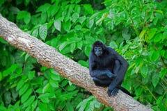 Mono de araña salvaje Fotos de archivo