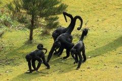 Mono de araña de cabeza negra Imagenes de archivo
