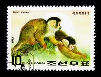 Mono de ardilla común (sciureus) del Saimiri, año del SE del mono Fotos de archivo libres de regalías