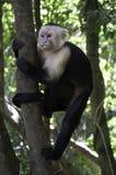 Mono de ardilla en un árbol Fotografía de archivo libre de regalías