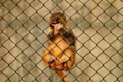 Mono de ardilla que sube Imágenes de archivo libres de regalías