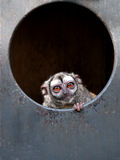 Mono de búho Imagen de archivo