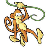 Mono de balanceo Fotos de archivo libres de regalías
