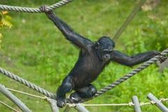 Mono de balanceo imagen de archivo