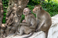 Mono de la familia Fotos de archivo libres de regalías