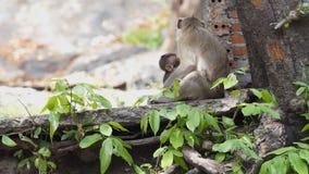 Mono de la madre metrajes