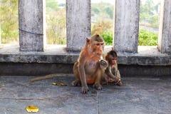 Mono de la madre con el mono del bebé Fotografía de archivo