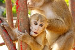 Mono de la madre que detiene a su bebé en parque zoológico Imagen de archivo