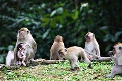 Mono de la madre y bebé y familia en bosque fotografía de archivo