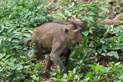Mono de la madre y del bebé Fotografía de archivo libre de regalías