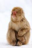 Mono de la nieve Fotos de archivo libres de regalías