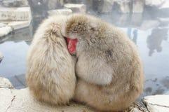 Mono de la nieve Imagen de archivo
