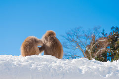 Mono de la nieve Fotos de archivo