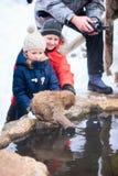 Mono de la nieve del bebé Imagen de archivo libre de regalías
