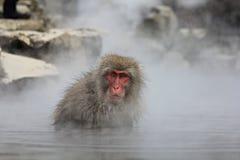 Mono de la nieve en las aguas termales, Jigokudani, Nagano, Japón Imagen de archivo libre de regalías