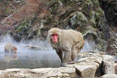 Mono de la nieve en las aguas termales, Jigokudani, Nagano, Japón Fotografía de archivo