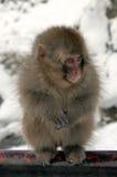 Mono de la nieve, prefectura de Nagano, Japón Imagenes de archivo