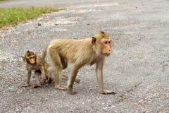 Mono de macaque de la madre y del niño Imagen de archivo