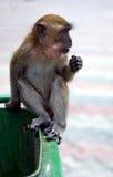 Mono de Macaque en compartimiento de basura Fotos de archivo