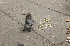 Mono de macaque lindo que sienta y que come el plátano fotos de archivo