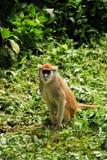 Mono de Patas Imagen de archivo