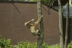 Mono de salto Fotos de archivo libres de regalías