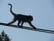 Mono del alambre del alquiler Imagen de archivo