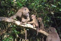 Mono del babuino Foto de archivo