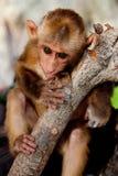 Mono del bebé Fotos de archivo libres de regalías