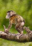 Mono del bebé Fotografía de archivo