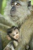 Mono del bebé con la madre fotografía de archivo libre de regalías