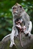 Mono del bebé de la explotación agrícola de la madre Imagenes de archivo