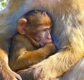 Mono del bebé en brazos del ` s de la madre fotos de archivo