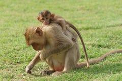 Mono del bebé en Mother& x27; parte posterior de s Imagenes de archivo