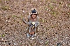 Mono del bebé que sostiene maíz fresco Imagen de archivo libre de regalías